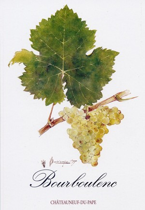 Painting of the Chateauneuf du Pape Bourboulenc grapes